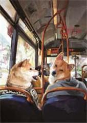 �c柴犬共度夏天