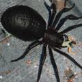 蜘蛛猎人3D