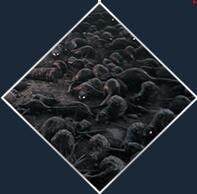 《瘟疫传说:无罪》中文免安装版